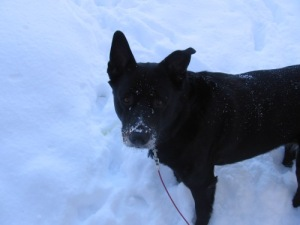 The snow-nosian pup