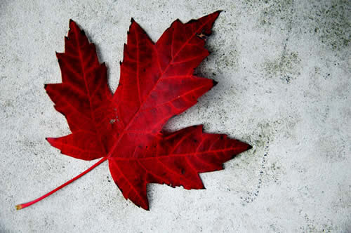 Red-Maple-Leaf-for-Canada-Day